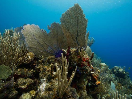 Arrecife en Atlantida