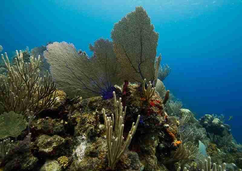 arrecifes y cayos de Atlantida