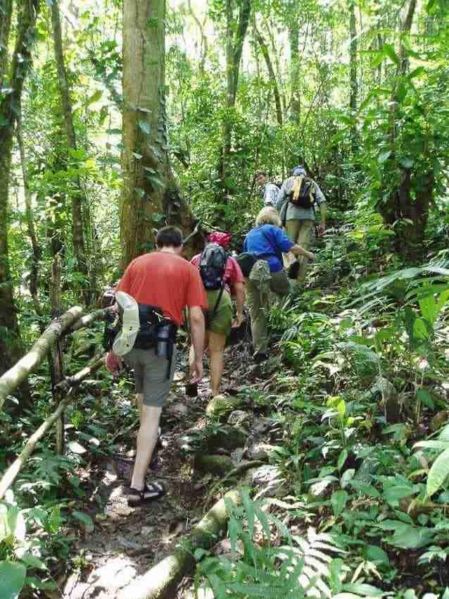 jungle hike (9)
