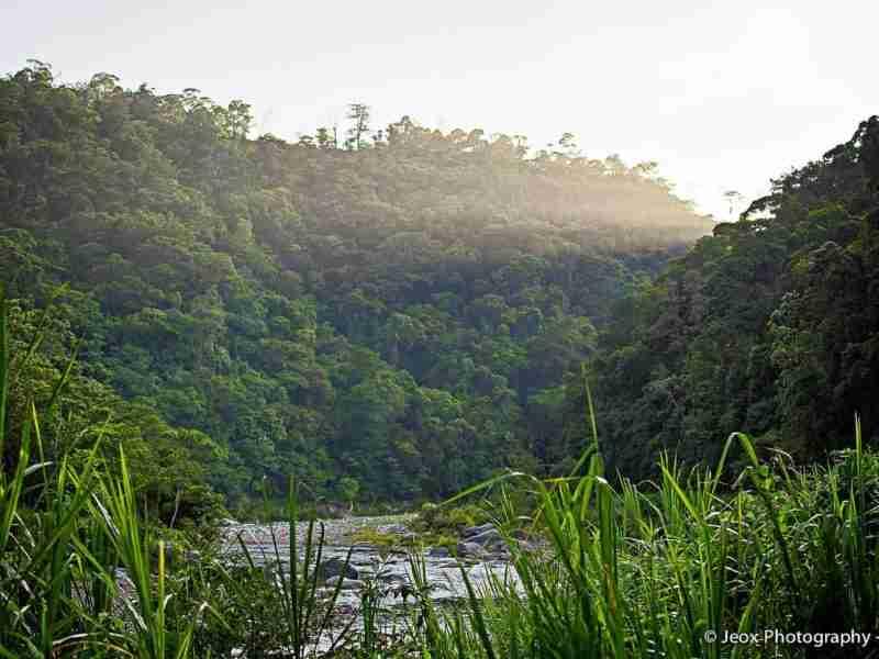 bosques y montañas en Atlántida