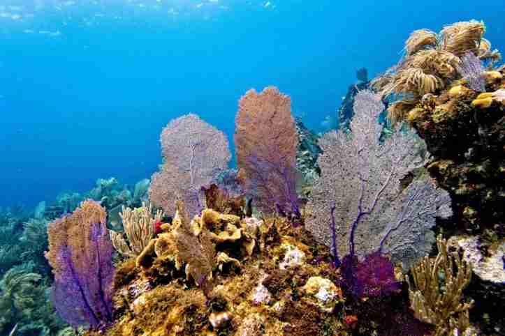 Magnífico arrecife en Cayos cochinos