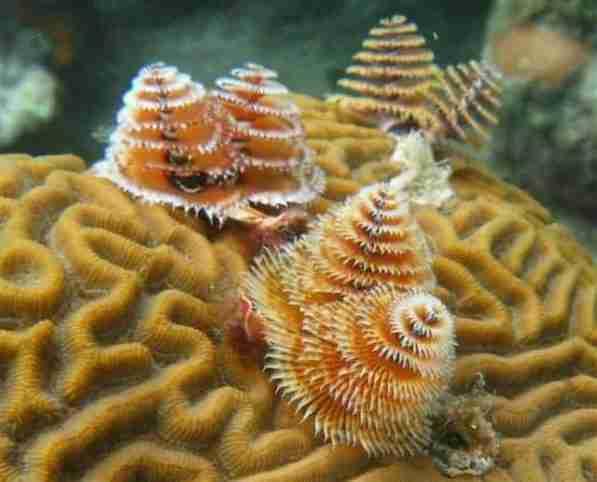 Arrecife en Cayos Cochinos