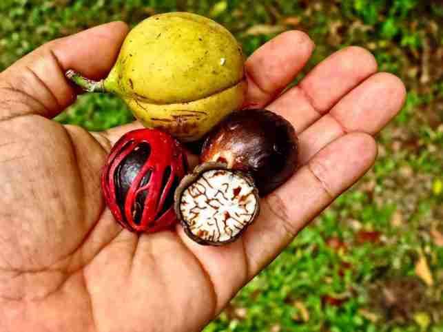 Frutas Exótcas en Lancetilla
