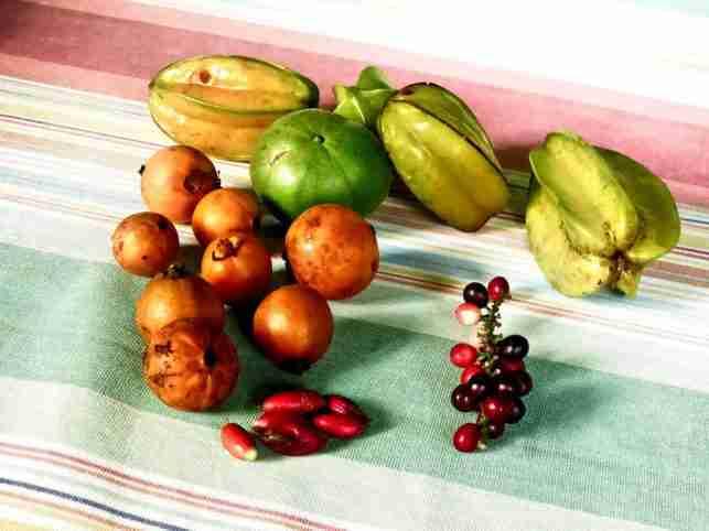 Rambután, Mangostinos y otras frutas exóticas de Lancetilla