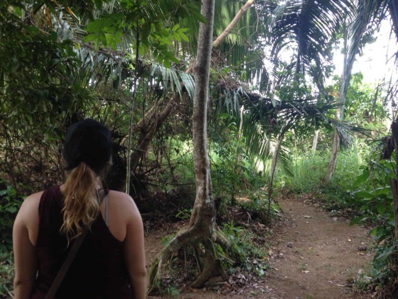 Una Buena Caminata en Pico Bonito