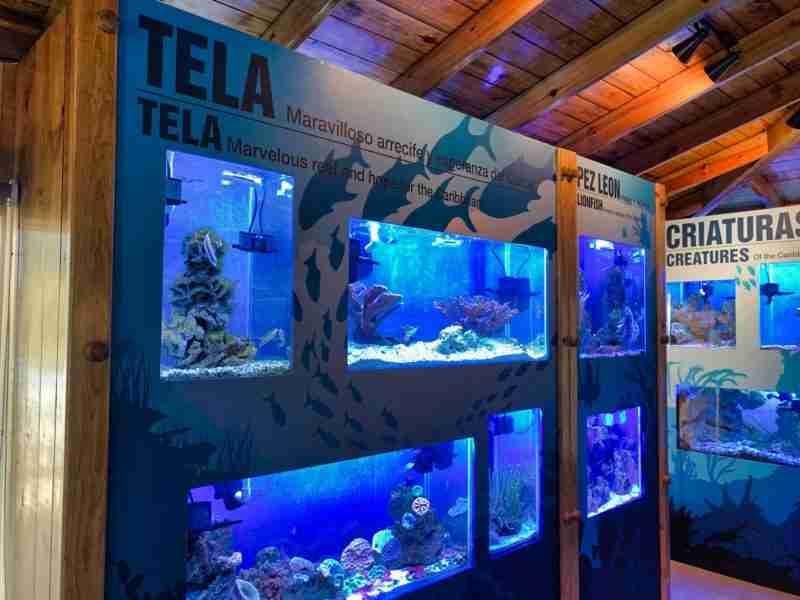 Coral Aquarium in Tela