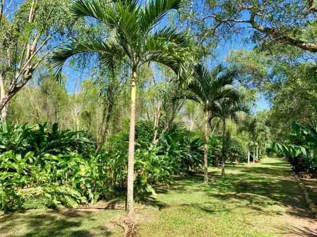 Jardines botánicos de Atlántida