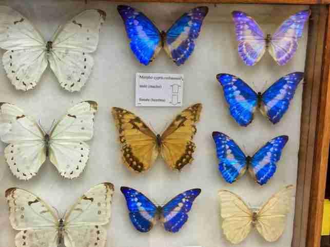 La Ceiba Butterfly Museum
