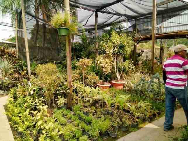 Jardines botanicos de Atlantida
