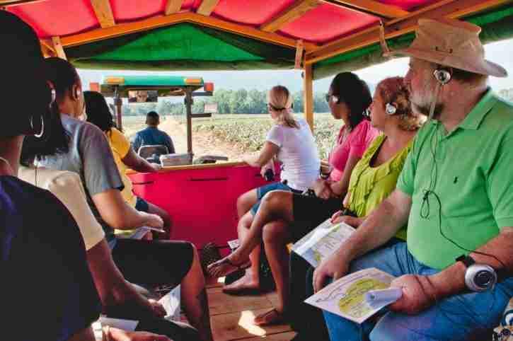 Tour de Piña en La Ceiba